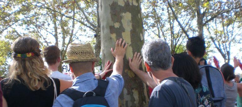 Une nouvelle association mobilisée « pour le droit des arbres » à Bordeaux