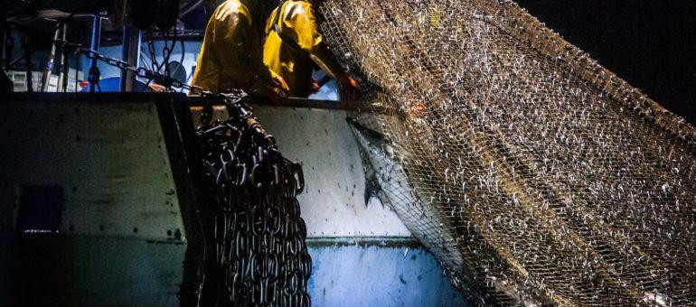 La pêche a tué des milliers de dauphins en deux mois dans le Golfe de Gascogne