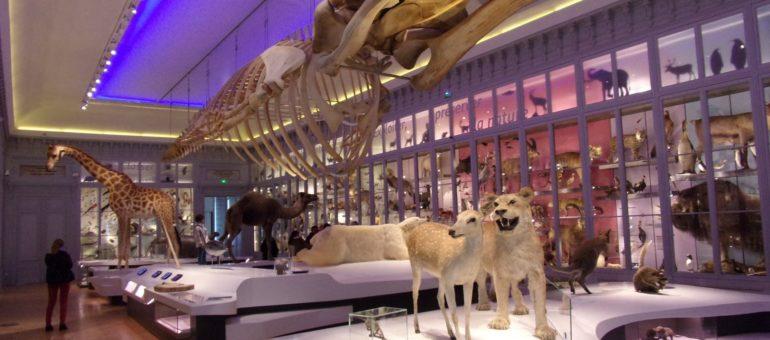 Petit pense-bête pour tout savoir sur la réouverture du Muséum de Bordeaux