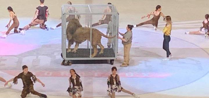 A Bordeaux, un lion en cage est retiré d'un spectacle après des réactions d'indignations