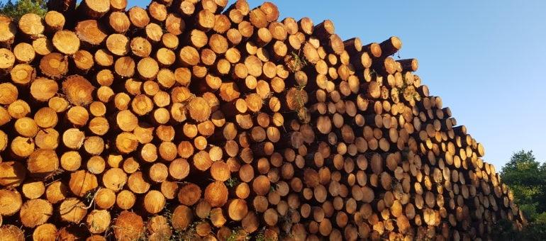 Une nouvelle coupe de bois dans la forêt de La Teste indigne les défenseurs, le propriétaire se justifie