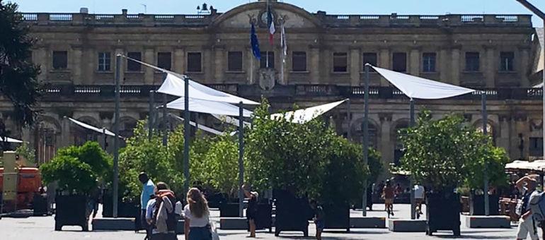 A Bordeaux, l'arbre qui cache le Palais Rohan