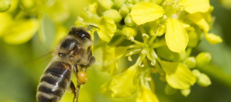 Ce que la Nouvelle-Aquitaine peut gagner à sauver sa biodiversité