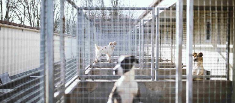 À la SPA du Sud-Ouest, chiens et chats en détresse cherchent nouvelle adresse