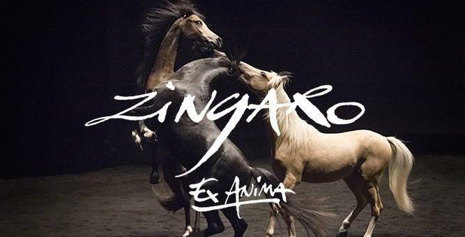 La mort du petit cheval de Zingaro alimente la colère des antispécistes