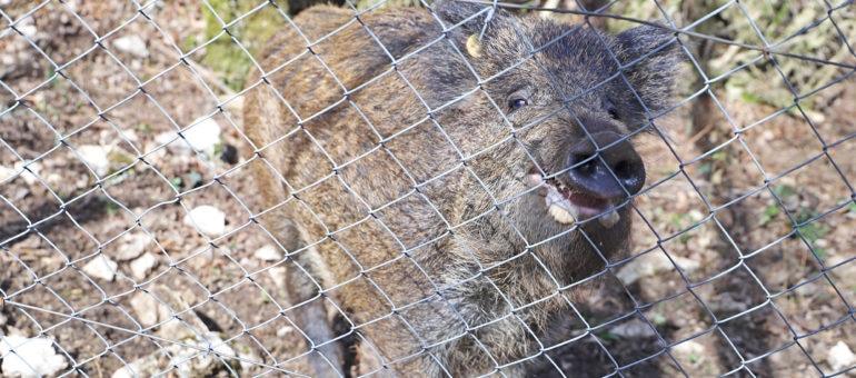 «Carnage derrière le grillage», les parcs d'attraction pour chasseurs en ligne de mire