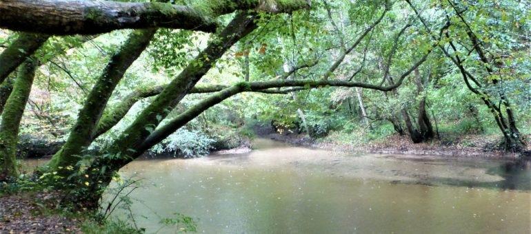 A la rescousse de la hêtraie du Ciron, une des plus anciennes forêts d'Europe