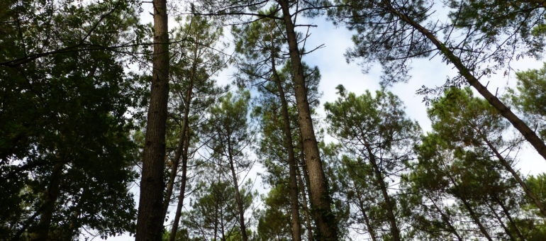 «Le changement climatique et les espèces invasives menacent les forêts du Sud-Ouest»