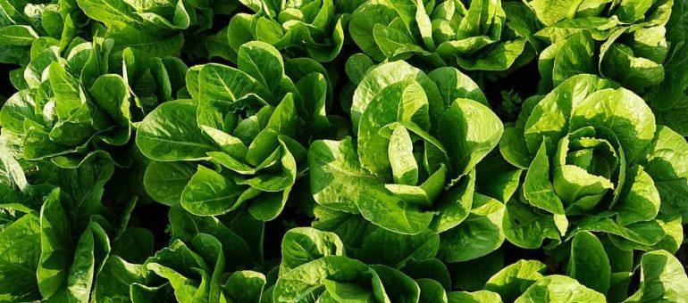 Observatoire de l'agribashing en Gironde : «Il faut arrêter de raconter des salades»
