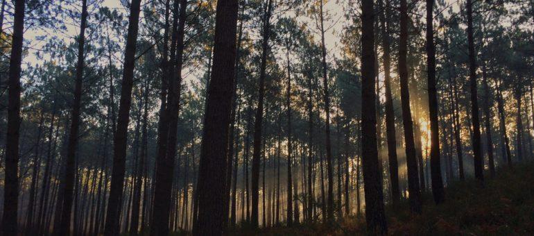 Les forêts de Nouvelle-Aquitaine aux abois ?