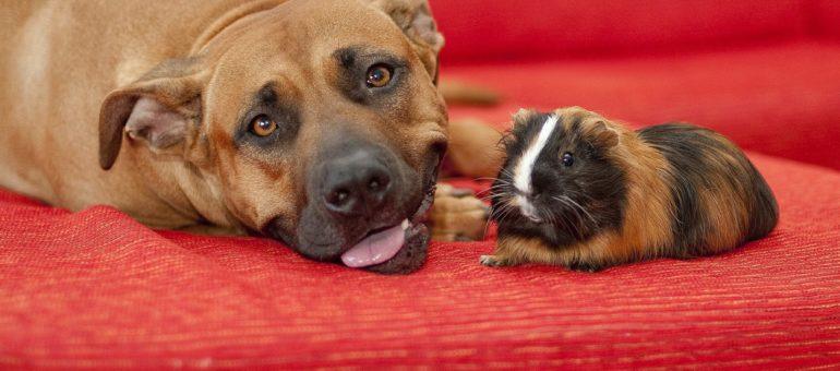 Coronavirus : «vous ne risquez rien auprès de vos animaux» rappelle la SPA