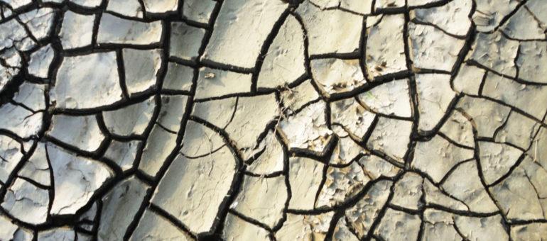 Appel pour «une humanité durable» après la pandémie du Covid-19