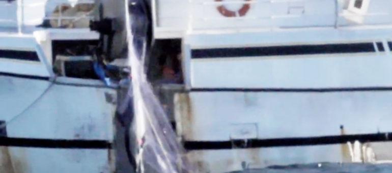 Cinq dauphins remontés par un navire immatriculé à Arcachon, le propriétaire «désemparé»