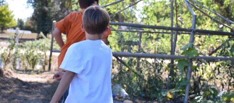 La Chrysalide, l'école de la forêt qui sort les enfants de leurs cocons