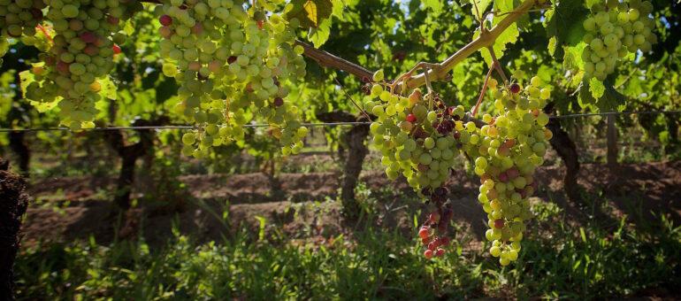 «Il va falloir se remettre en question» estime Paul, viticulteur à Saint-Emilion pour 1000 euros par mois