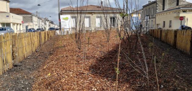 Bordeaux veut pousser les habitants à planter les rues et préserver les arbres